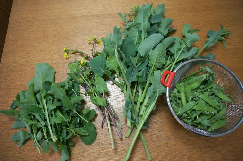 ルッコラ,紅菜苔,のらぼう菜,絹さや