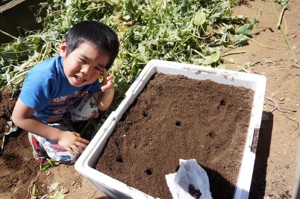 次男と発泡スチロールの箱に植えたスイカの種