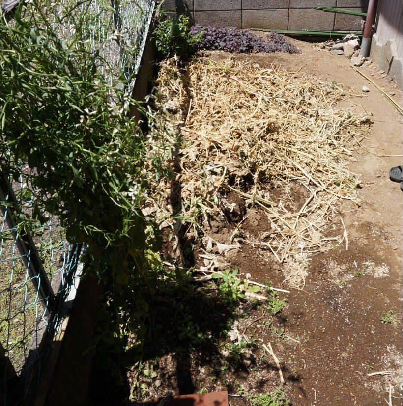 耕す前の庭