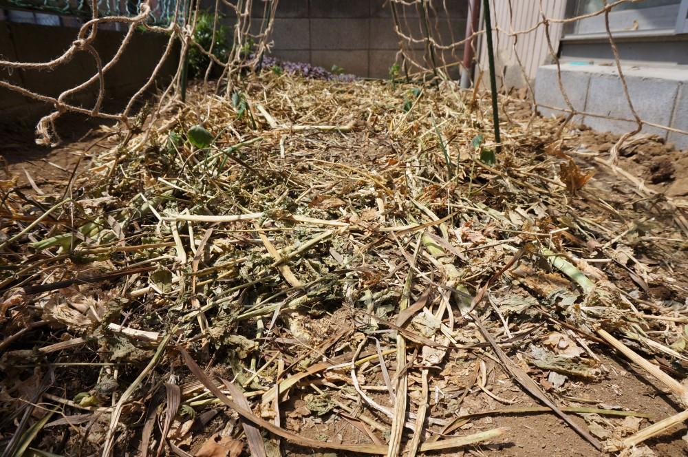 作業終了後の庭畑