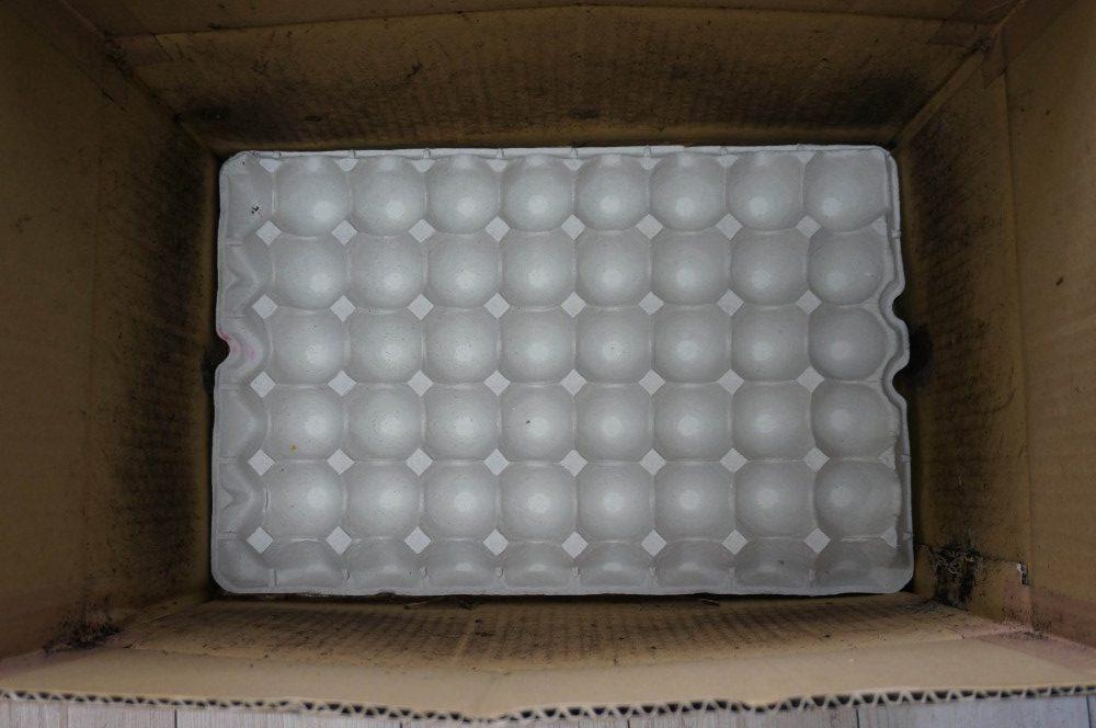 卵のトレイセット