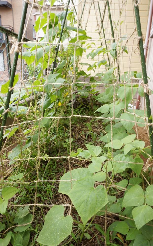横方見た庭の畑
