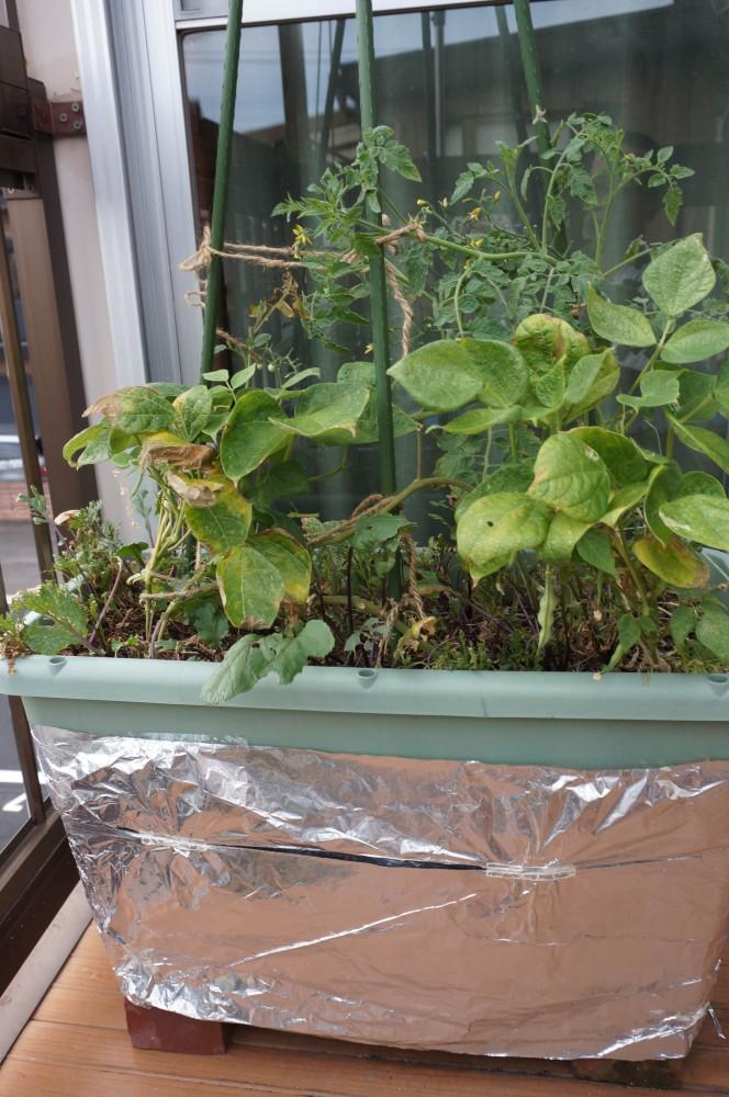 無肥料栽培プランター